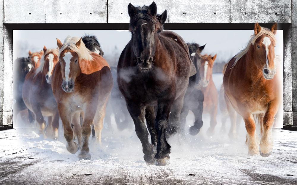 tranh 3d động vật NTP