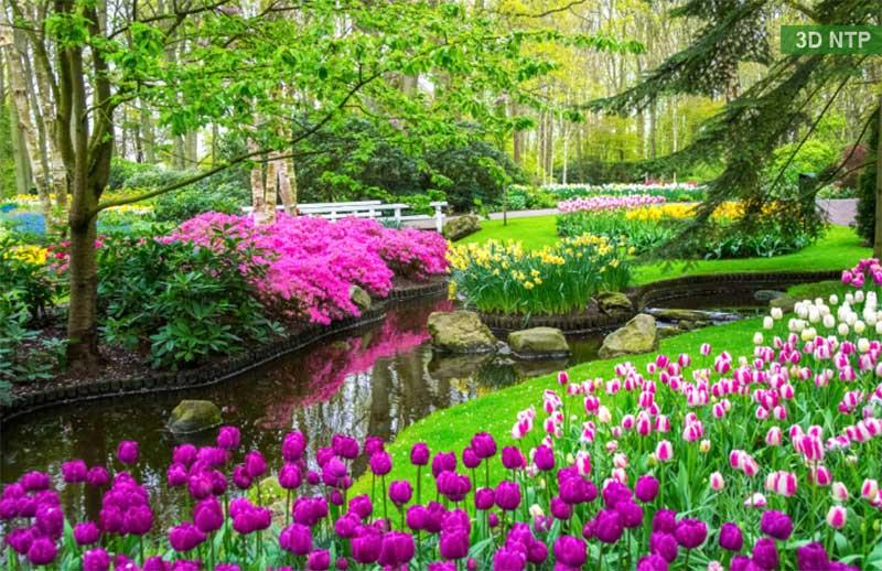 Mẫu tranh hoa tulip