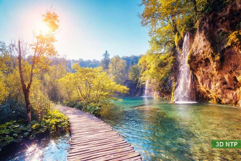 Tranh phong cảnh rừng croatia