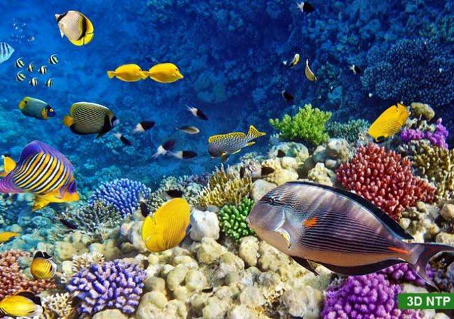 tranh dán tường 3D cảnh biển